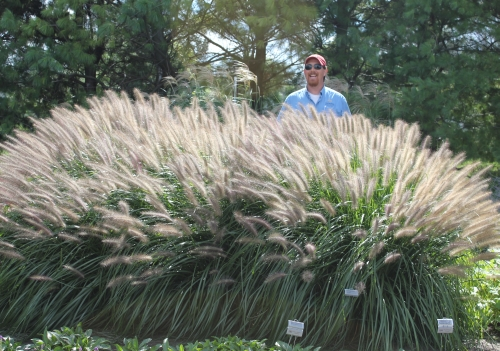 Fall for ornamental grasses the garden professors for Ornamental grasses with plumes